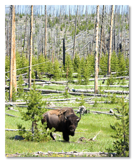 """""""Después, un búfalo se quedará observando estúpidamente hacia tu alma mientras masca lentamente el pasto y se pedorrea suavemente"""""""